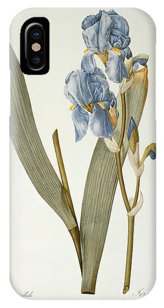 Botanical iPhone Case - Iris Pallida by Pierre Joseph Redoute