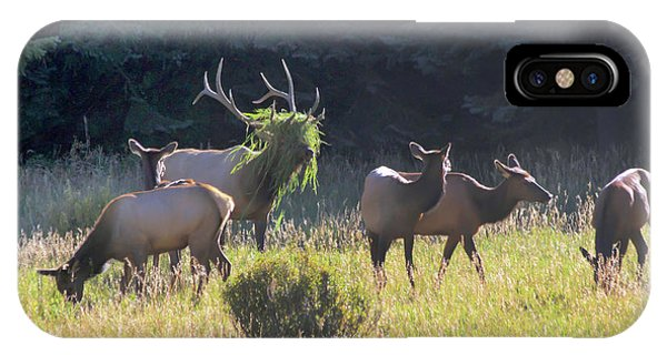 Is That Big Foot? IPhone Case