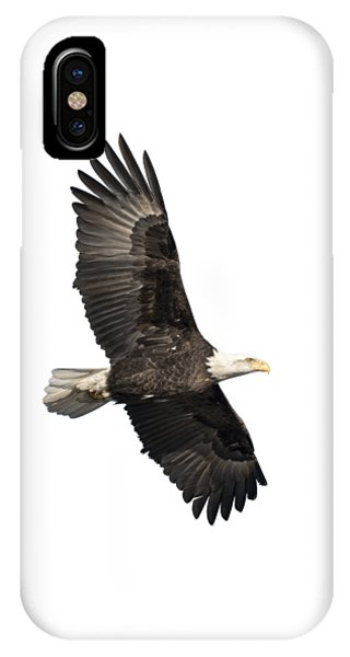 Isolated American Bald Eagle 2016-4 IPhone Case
