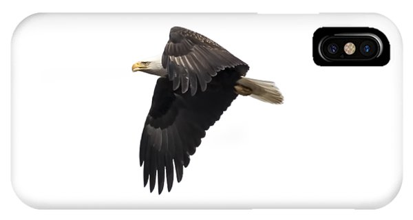 Isolated American Bald Eagle 2016-6 IPhone Case