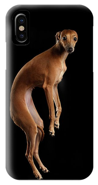 Italian Greyhound Dog Jumping, Hangs In Air, Looking Camera Isolated IPhone Case