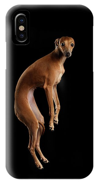 Dog iPhone X / XS Case - Italian Greyhound Dog Jumping, Hangs In Air, Looking Camera Isolated by Sergey Taran