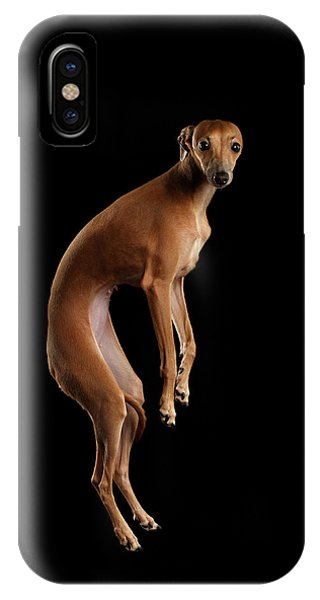 Dog iPhone X Case - Italian Greyhound Dog Jumping, Hangs In Air, Looking Camera Isolated by Sergey Taran