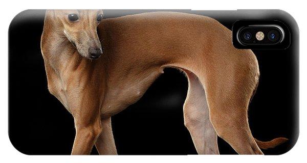 Dog iPhone X / XS Case - Italian Greyhound Dog Standing  Isolated by Sergey Taran