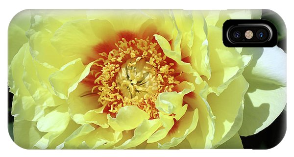 Itoch Peony  IPhone Case
