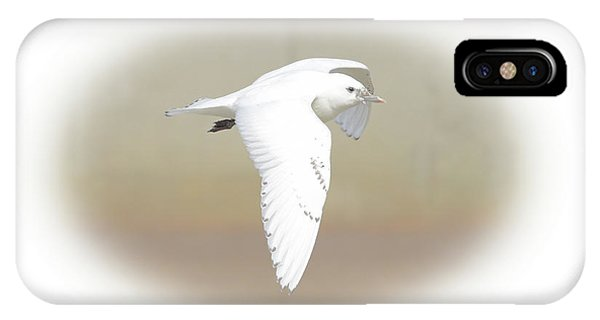 Ivory Gull IPhone Case