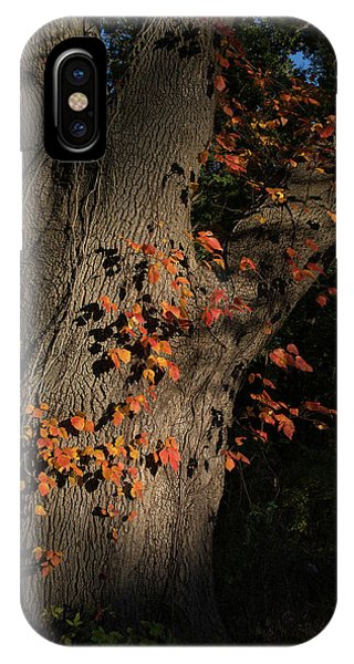 Ivy In The Fall IPhone Case