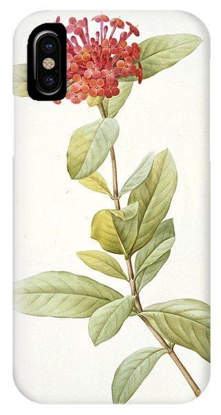 Flora iPhone Case - Ixora Speciosa by Pierre Joseph Redoute