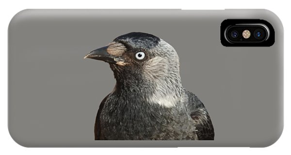 Jackdaw Corvus Monedula Bird Portrait Vector IPhone Case