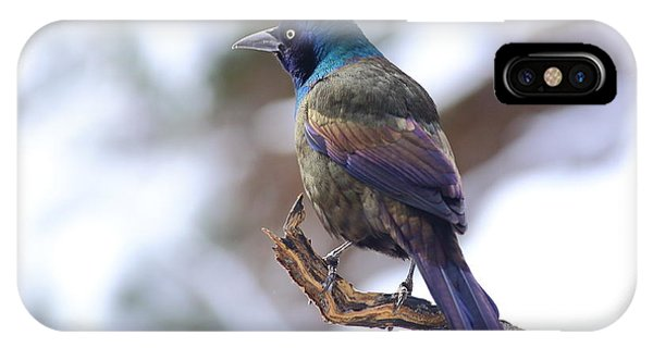 January Grackle IPhone Case