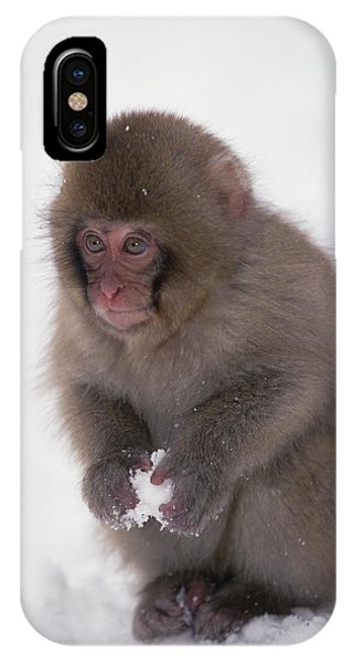 Mp iPhone Case - Japanese Macaque Macaca Fuscata Baby by Konrad Wothe