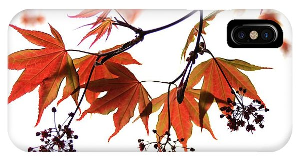 Japanese Maple 2011-2 IPhone Case