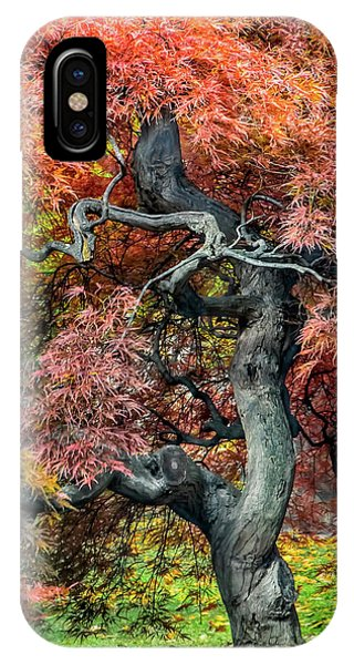 Japanese Maple - Aged To Perfection IPhone Case