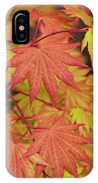 Japanese Maple IPhone Case