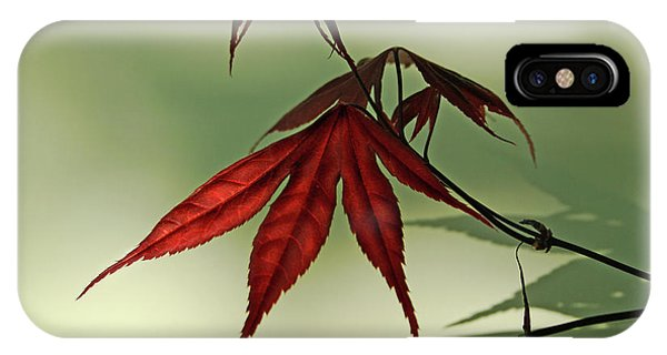 Japanese Maple Leaf IPhone Case