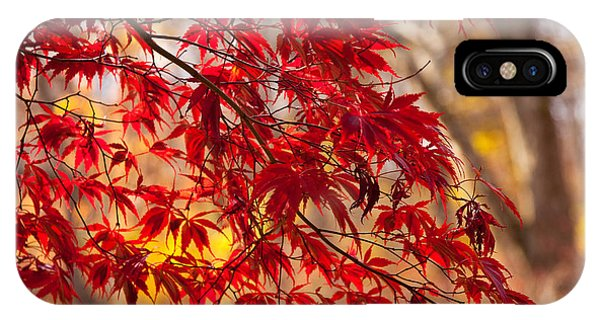 Japanese Maples IPhone Case