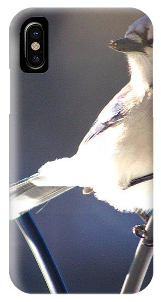 Jay Bird Phone Case by Diane Merkle