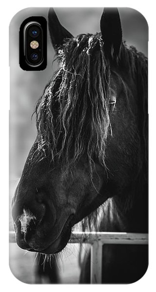 Jay The Rasta Horse IPhone Case