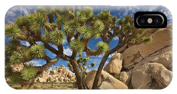 Mp iPhone Case - Joshua Tree And Blue Sky by Yva Momatiuk John Eastcott