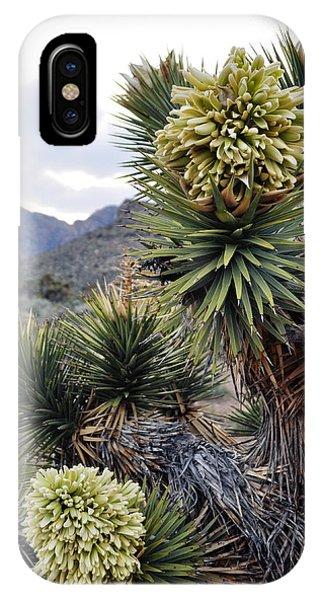 Joshua Tree Bloom Rainbow Mountain IPhone Case