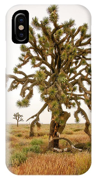 Joshua Trees In Desert IPhone Case