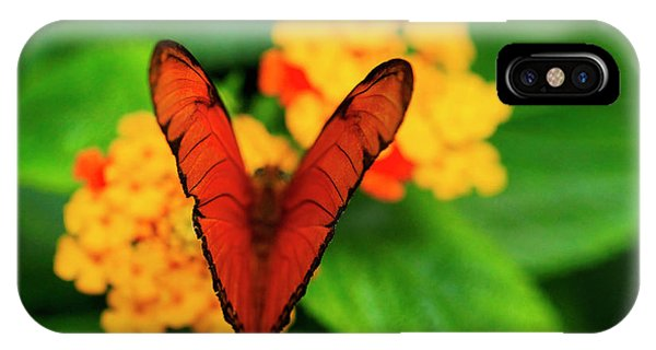 Julia Butterfly, Dryas Iulia IPhone Case