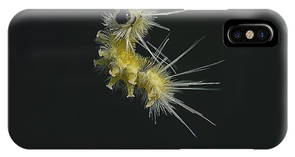 Caterpillar iPhone Case - Jump by Susan Capuano