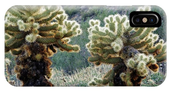 Teddy Bear Cholla iPhone Case - Jumping Cholla by Methune Hively