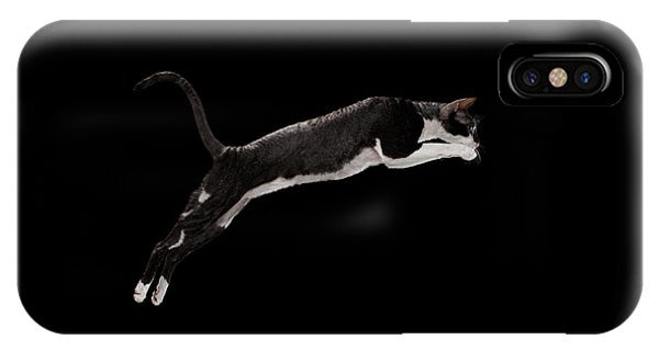 Jumping Cornish Rex Cat Isolated On Black IPhone Case