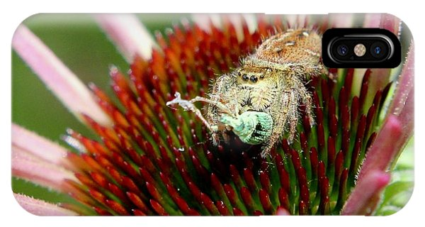 Jumping Spider With Green Weevil Snack IPhone Case