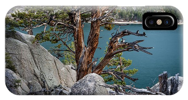 June Lake Juniper IPhone Case