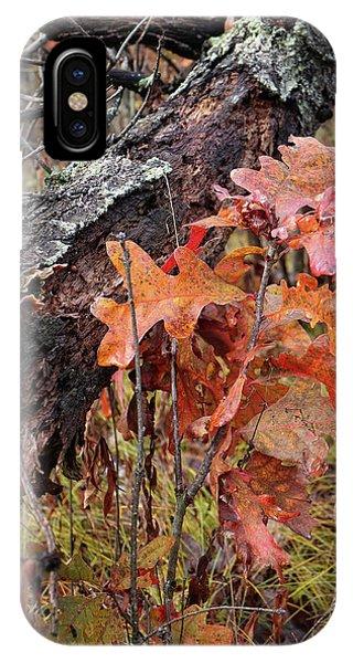 Junior Oak In Fall Colors IPhone Case