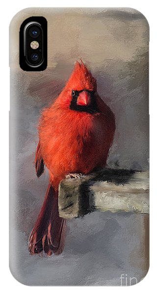 Avian iPhone Case - Just An Ordinary Day by Lois Bryan