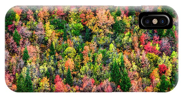 Foliage iPhone Case - Just In Time by Chad Dutson