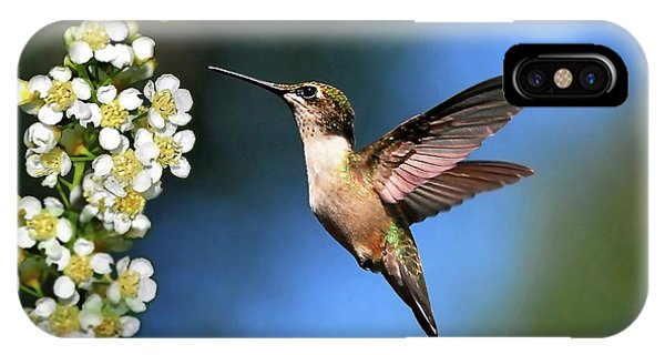 Humming Bird iPhone Case - Just Looking by Christina Rollo