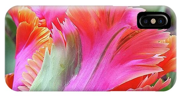 Just The Most Amazing Flower Phone Case by Dante Harker