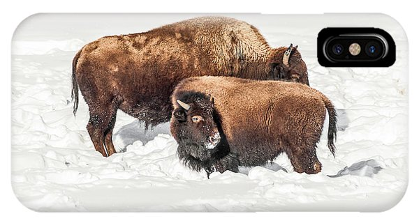 Juvenile Bison With Adult Bison IPhone Case