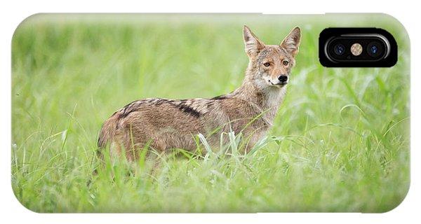 Juvenile Coyote IPhone Case