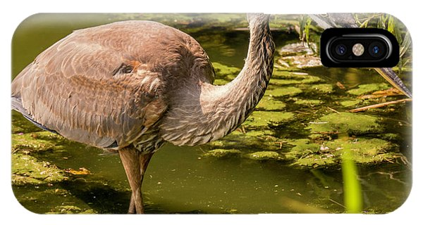Juvenile Great Blue Heron IPhone Case