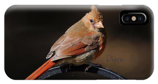 Juvenile Male Cardinal IPhone Case