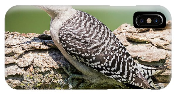 Juvenile Red-bellied Woodpecker IPhone Case