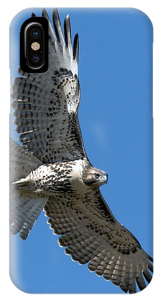 Juvenile Red-tailed Hawk At Riverside Cemetery IPhone Case