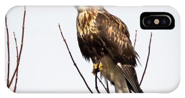 Juvenile Rough-legged Hawk  IPhone Case