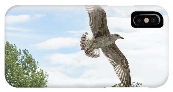 IPhone Case featuring the photograph Juvenile Seagull In Flight by Jacek Wojnarowski