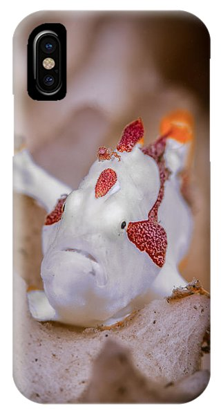 Juvenile Warty Frogfish IPhone Case