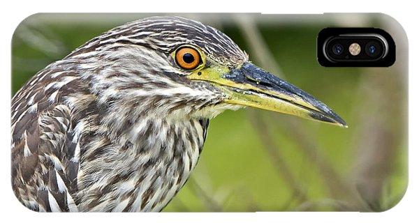 Juvi Black-crowned Night Heron IPhone Case