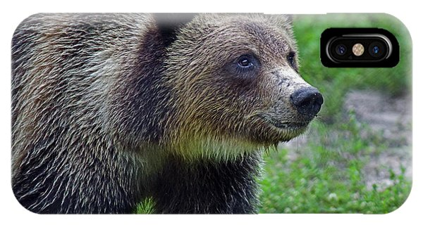 Juvie Grizzly IPhone Case