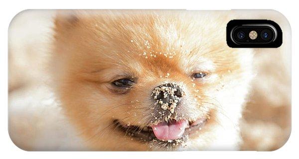 Pomeranian iPhone Case - Kai Loves The Beach by Sean Davey