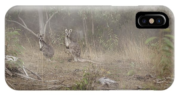 Kangaroo iPhone Case - Kangaroos In The Mist by Az Jackson