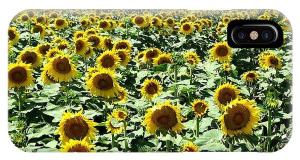 Kansas Sunflower Field IPhone Case